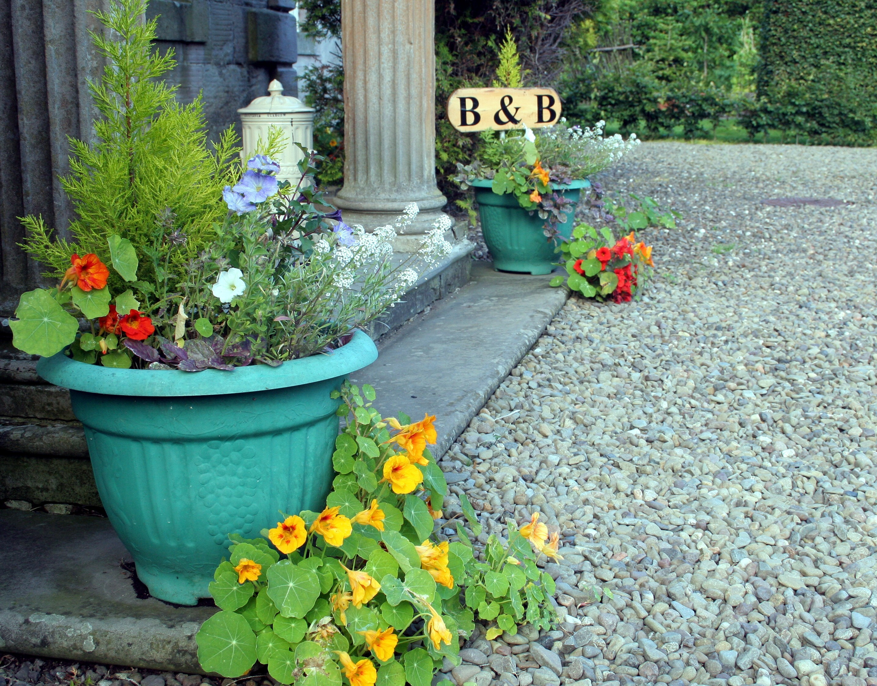 Dallars B&B Front Step & Bees